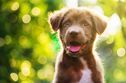 5 Dogs Breeds With Surprising Histories