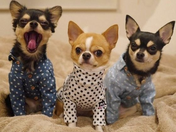 Puppies in Pajamas is the Snoozebutton For Your Life