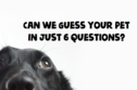Can We Guess Your Pet In Just Six Questions?