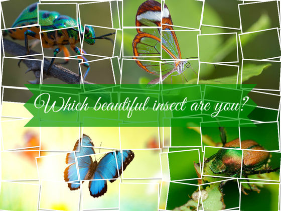 What Type Of Beautiful Insect Are You?