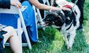 You Have To See This Three-Legged Dog Who Was The Best Ring Bearer Ever