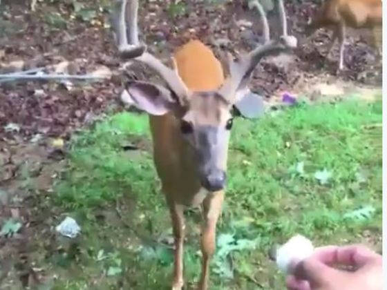 Meet Money: A Powdered-Donut Loving Deer