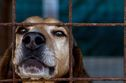 Help An Animal In Need And Change A Life, Here's How