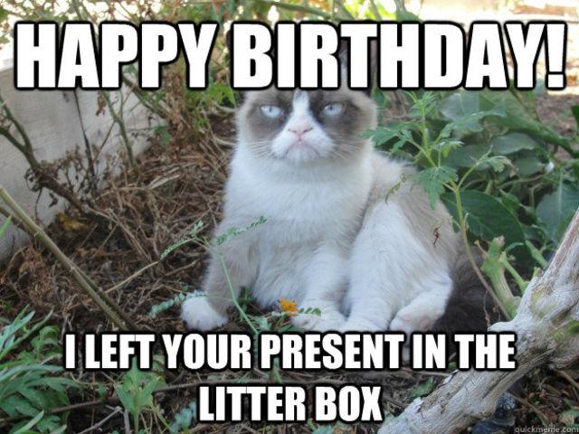 Happy Birthday I Hope Its Terrible 11 Grumpy Cat Pics To Brighten