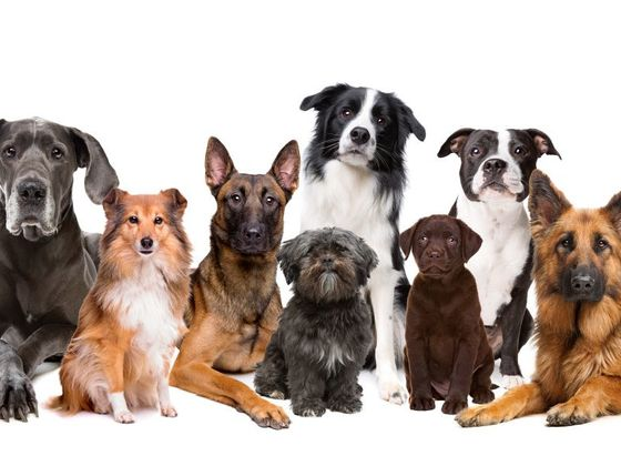 Which Kind Of Dog Fits You Best?