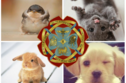 These Adorable Baby Animals Will Sort You Into Your Ilvermorny House!