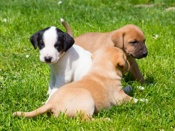 Which Mixed Breed Puppy Should You Adopt?
