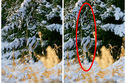 Can You Find The Human Camouflaged Into Each Of These 16 Photos?