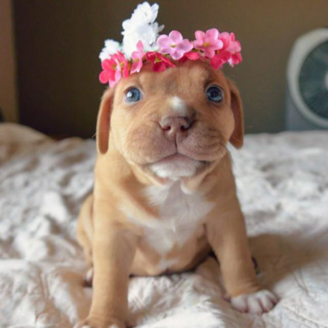 Happy National Puppy Day Have The Most Adorable Puppies Ever