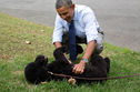 Sunny Obama Bit A White House Guest; Should She Be Put Down?