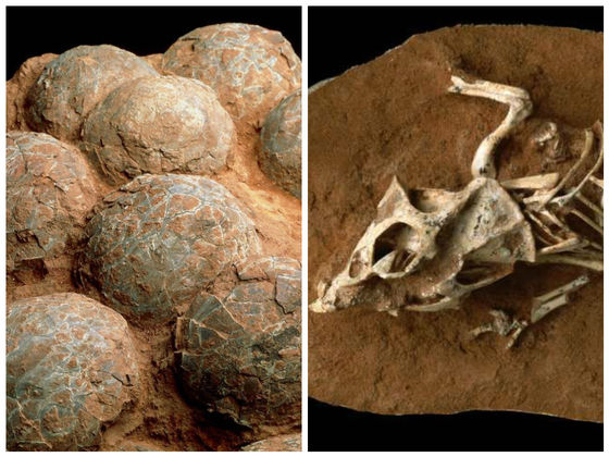 Dinosaur Eggs May Have Taken A LONG Time To Hatch... And That May Have Led To Their Extinction...