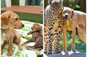These 17 Sets Of Animal Siblings Show The Beautiful Meaning Of Lifelong Friendships!