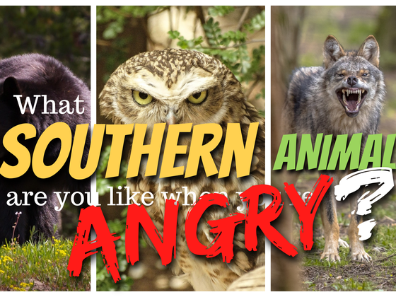 What Southern Animal Are You Like When You're Angry?