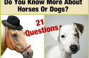 Do You Know More About Horses Or Dogs?