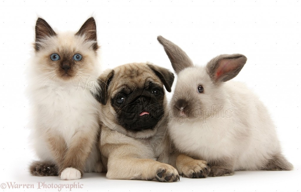 What Animal Are You Dog Cat Or Bunny Short Playbuzz