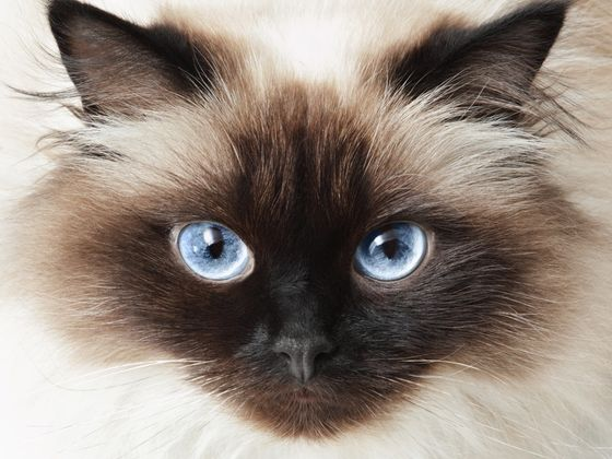 Which Rare Cat Breed Is Your Kitty Spirit Animal?