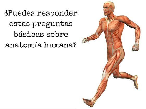 Puedes responder estas preguntas básicas sobre anatomía humana?