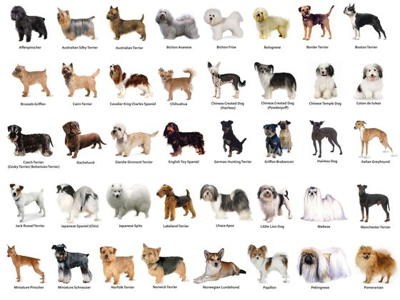 What dog breed are you playbuzz for How do i find the name of a movie