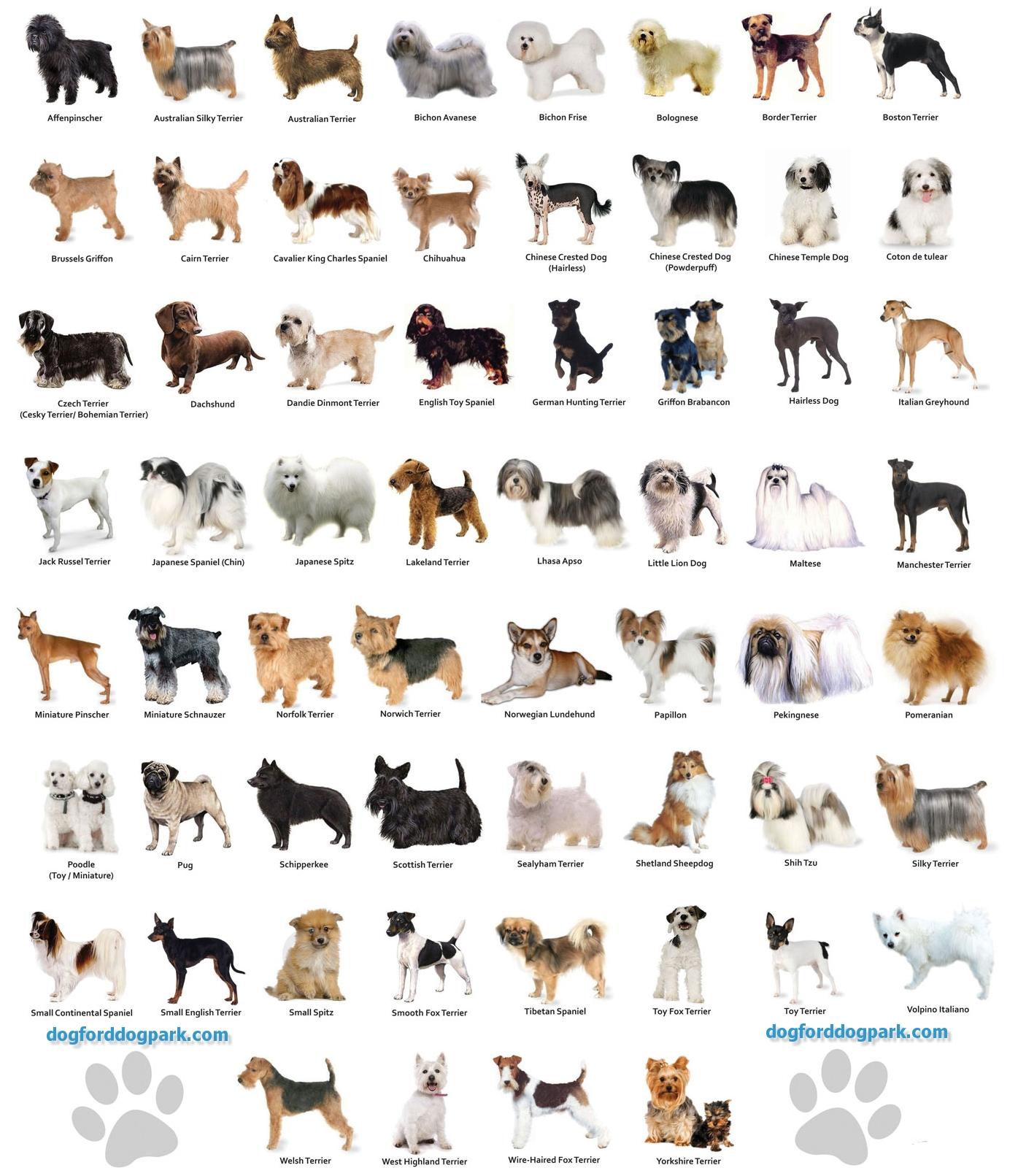 Puppies Breed Names Goldenacresdogs Com
