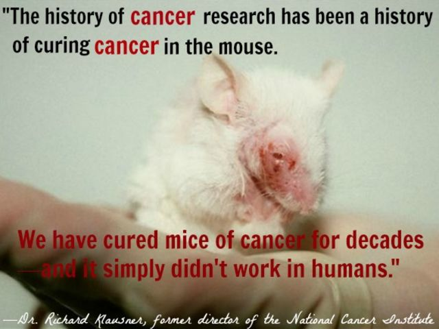 testing on animals wrong or right essay Harmful testing on animals is wrong in american society, many groups and organizations are debating whether or not animal testing should be banned needless animal experimentation is wrong if penicillin had been tested on guinea pigs, it might never have reached the public.