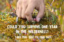 Could You Survive For A Year In The Wilderness? Take This Quiz To Find Out