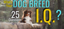 What's Your Dog Breed I.Q.?