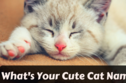 Find Out Your Cat Name By Taking This Quiz!