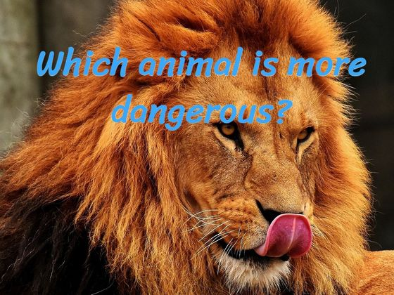 Are You An Animal Whiz And Can You Tell Us Which Animal Is More Dangerous?