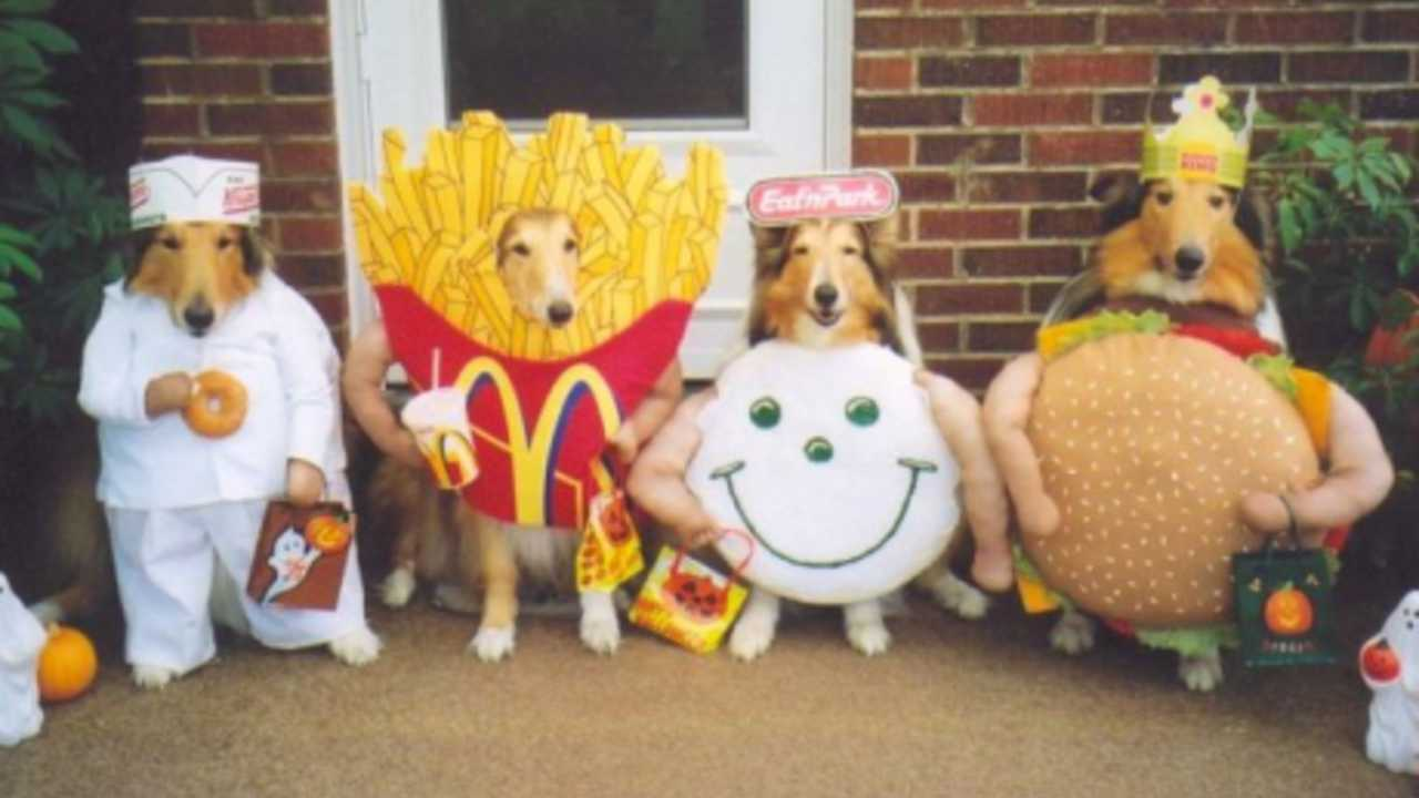 Which Dressed Up Dog Is The Cutest Playbuzz