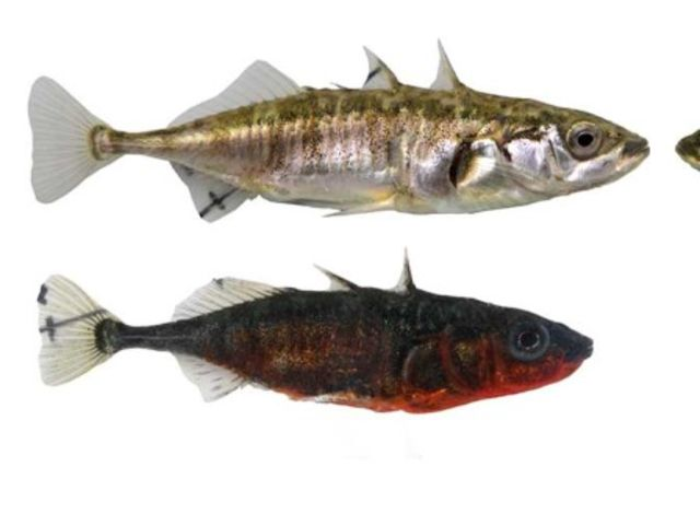 Fish Species in Lake Constance