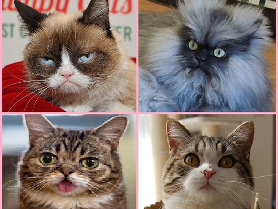 Which Internet Cat Sensation Are You?