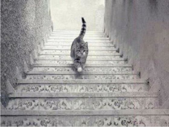 This Is The Question That May Have No Answer; Is This Cat Going Up Or Down The Stairs?