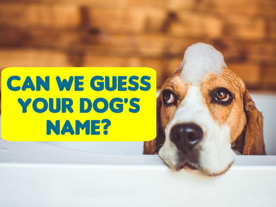 Can We Guess Your Dog's Name In 12 Questions?