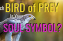 Which Bird Of Prey Is Your Soul Symbol?