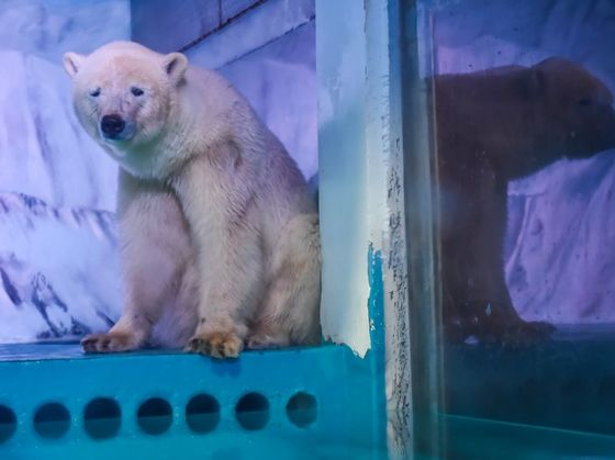 Good News For The Worlds Saddest Polar Bear!