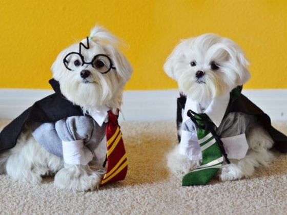 Choose Some Puppies And We'll Sort You Into Your Hogwarts House